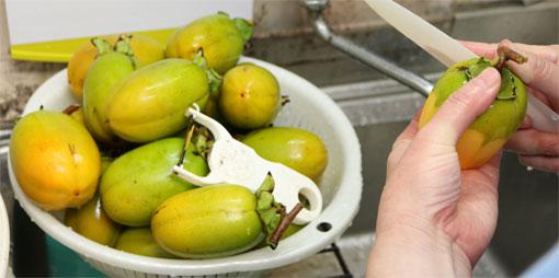 渋柿の皮をむく