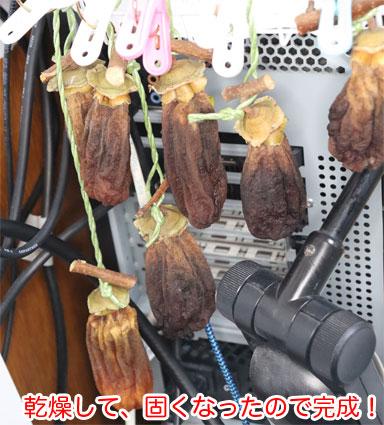干し柿23日目 パソコンの排気熱で完全に乾燥