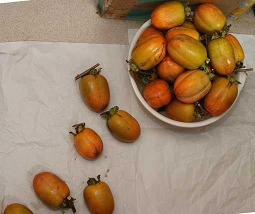 2021年10月収穫 しぶ柿